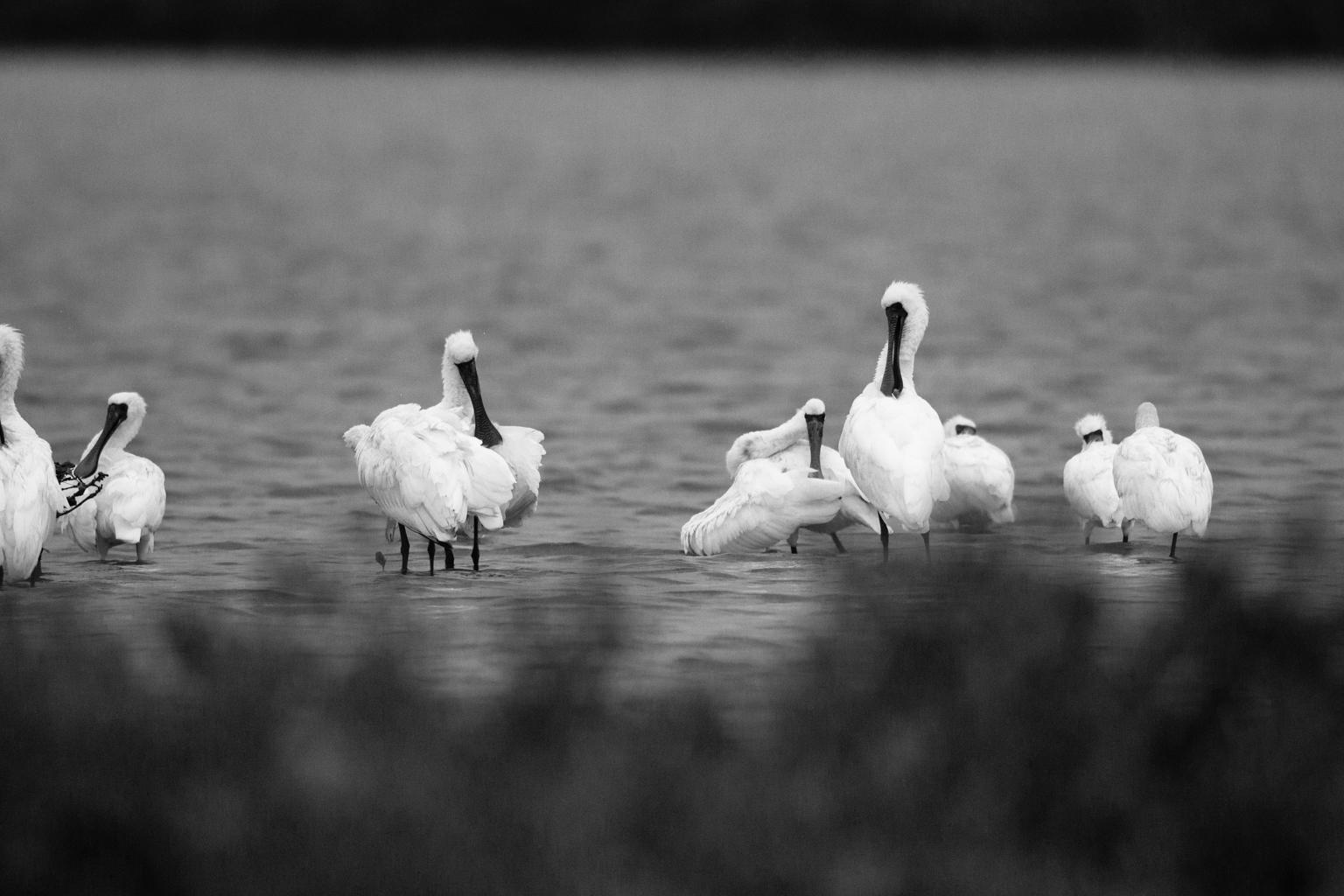65A6913 Black & White
